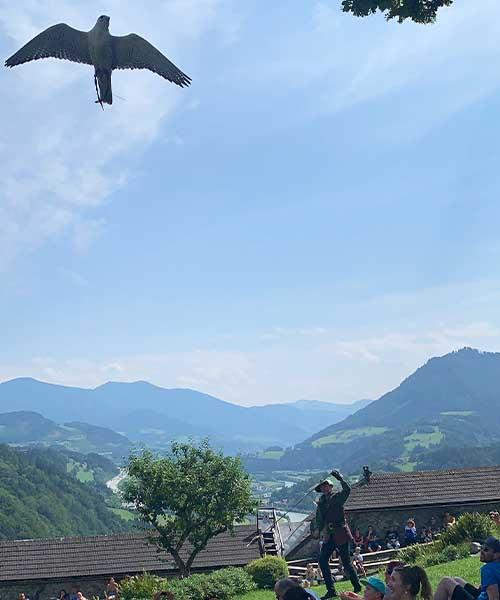 Sokol u tvrđavi Hohenwerfen