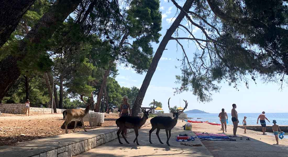 Plaža s jelenima na otoku Badija kraj Korčule