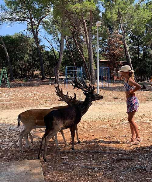 Djevojčica i jeleni na otoku Badija
