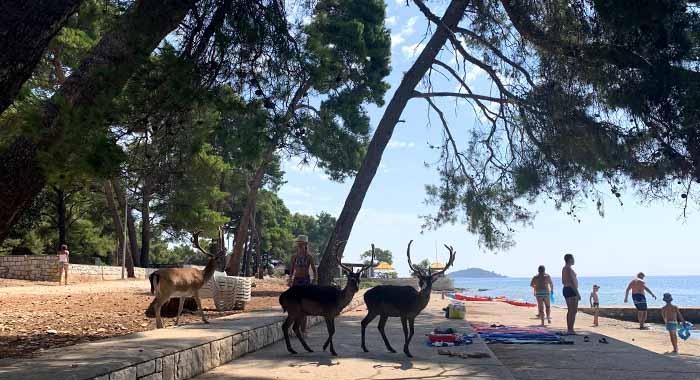 Plaža s jelenima: otok Badija kraj Korčule