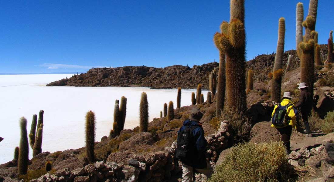 Divovski kaktusi u slanoj pustinji u Boliviji