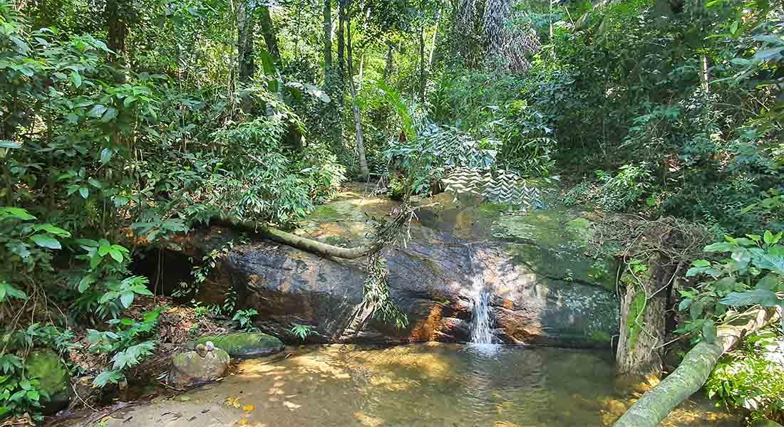 Šuma Tijuca u Rio de Janeiru