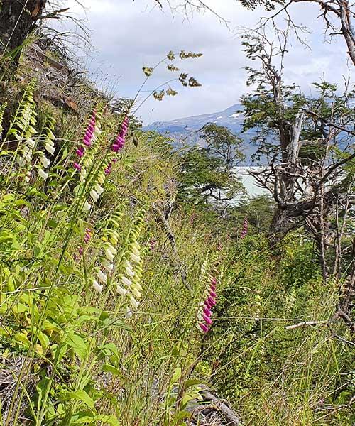 Cile Patagonija 4