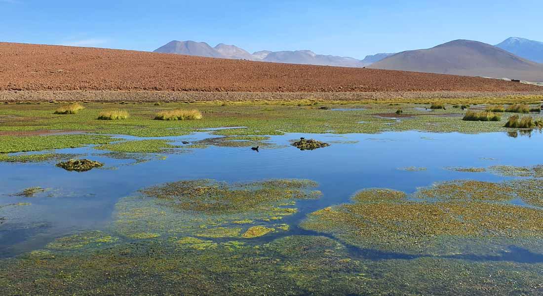 Priroda Čile 2