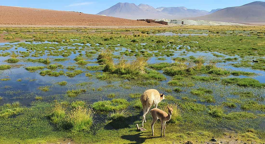 Priroda Čile 1