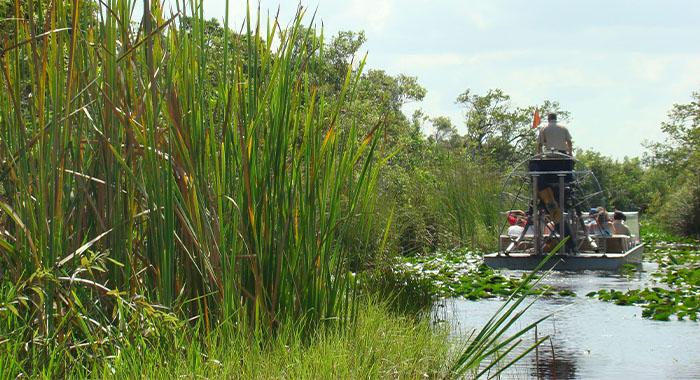 Aligator na vratu u Nacionalnom parku Everglades