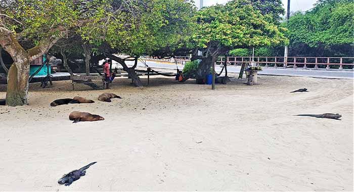 Galapagos: Istražili smo otok u obliku morskog konjica