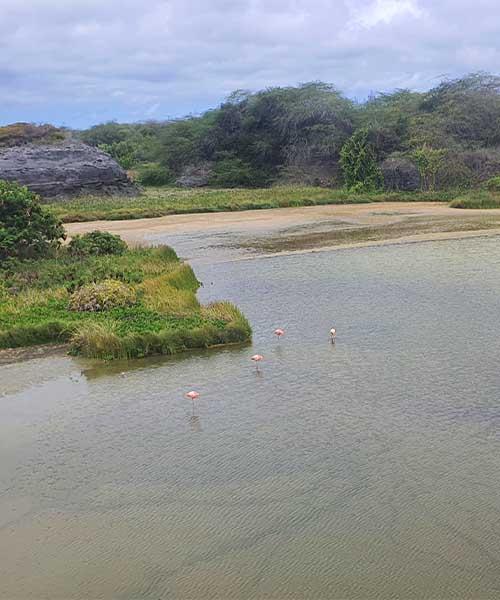 Plamenci na Galapagosu