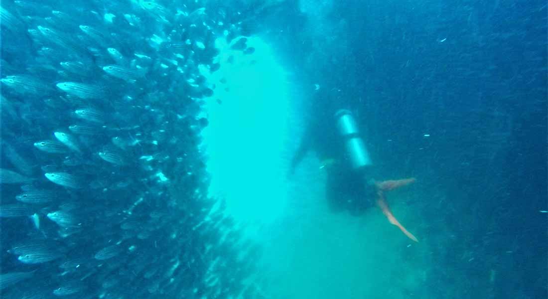 Ronjenje na Galapagosu