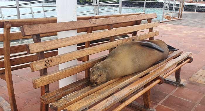 Obilazak Galapagosa: 7 dana na otočju čudesnih životinja