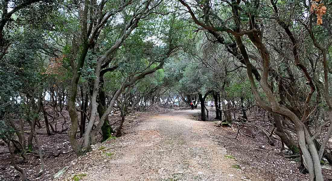 Šuma makije na Brijunima