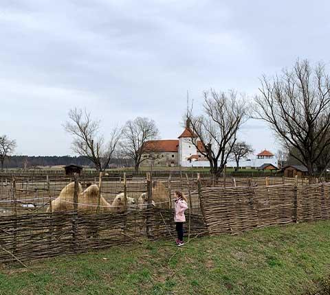 Fantastična 4: Stari grad Đurđevac, deve, pješčane dine i pijetao