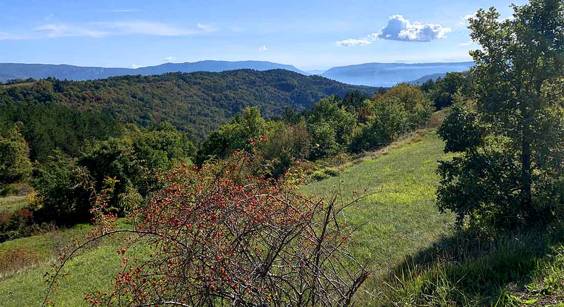 Centralna Istra u jesen