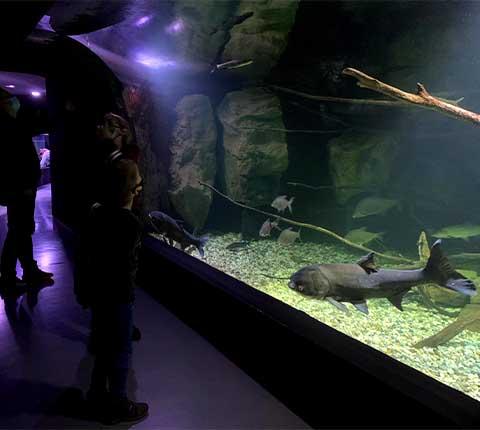 Karlovački akvarij: izlet s djecom u neobičan svijet riba