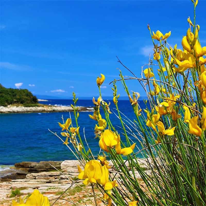 Aktivan odmor u Istri: idemo u općinu Ližnjan