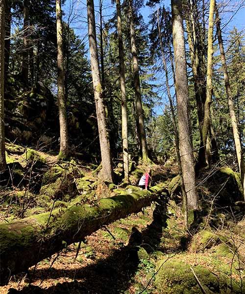 Park šuma Golubinjak