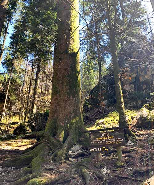 Kraljica šume u Park šumi Golubinjak