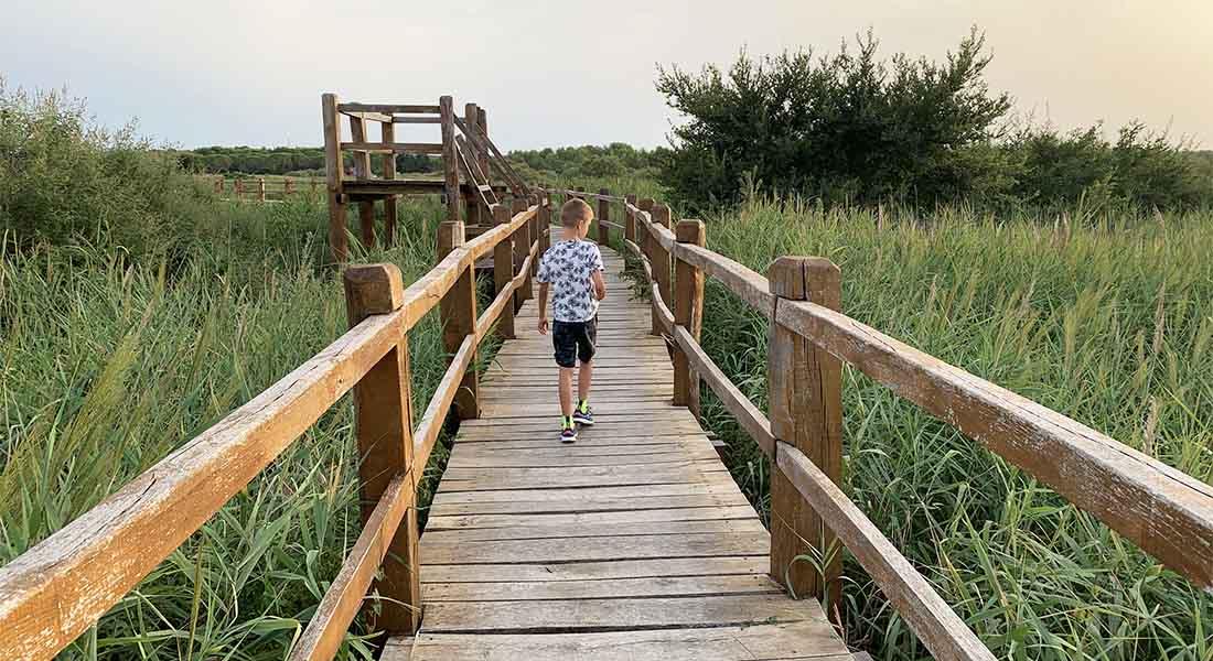 Tršćak u Parku prirode Vransko jezero