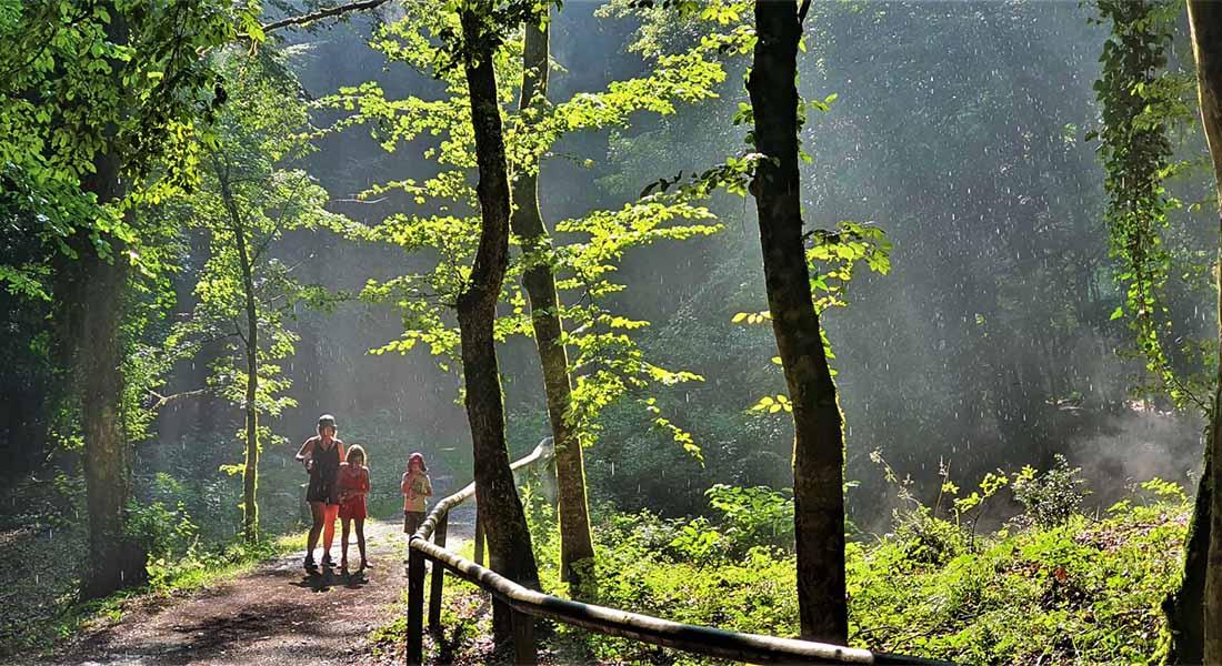 Sjenovita šuma u NP Gargano