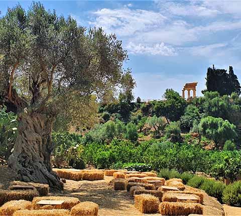 Agrigento na Siciliji: obišli smo najveće grčke hramove izvan Grčke