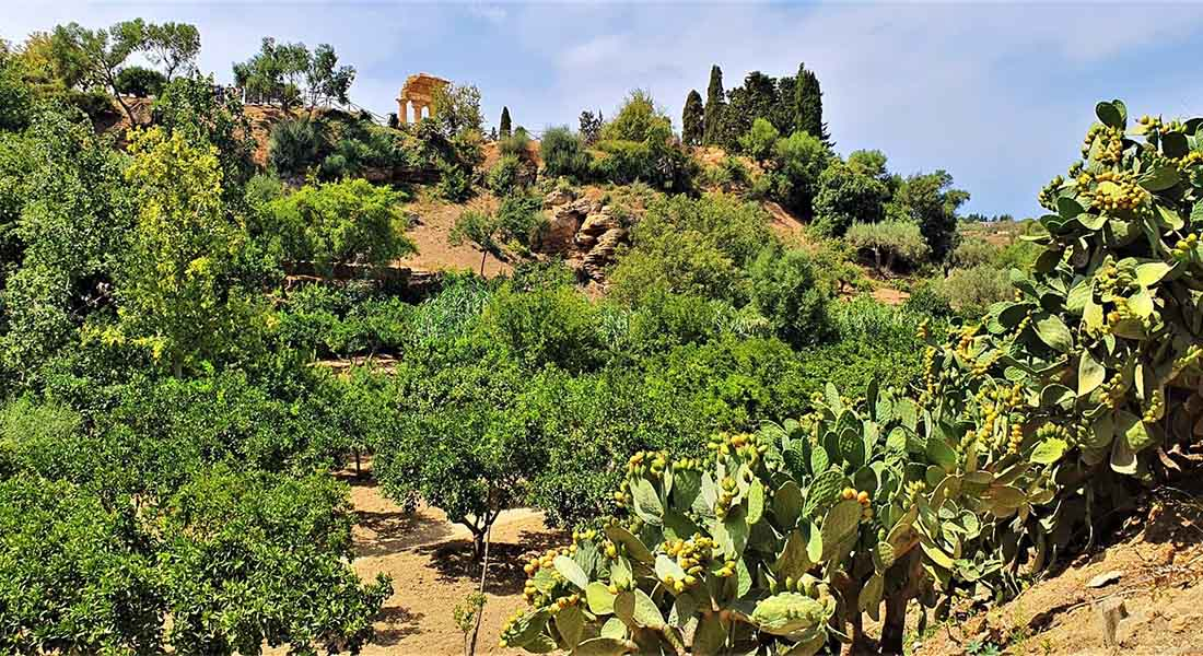 Vrt na Siciliji
