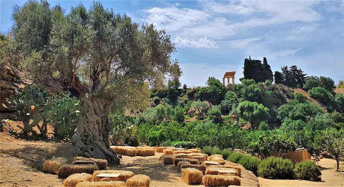 Vrt u Dolini hramova
