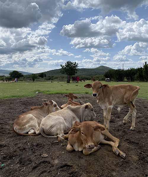 Selo plemena Maasai