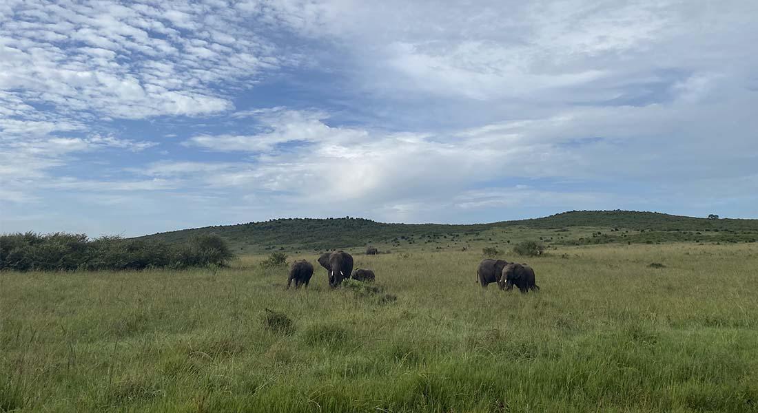 Slonovi na safariju u Keniji