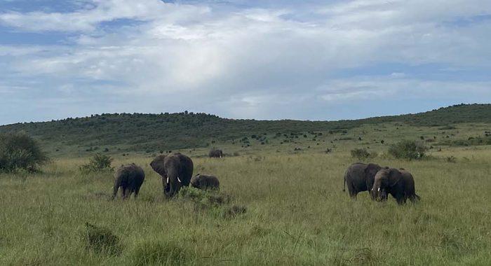 Safari u Masai Mara: dvodnevna avantura u životinjskom carstvu