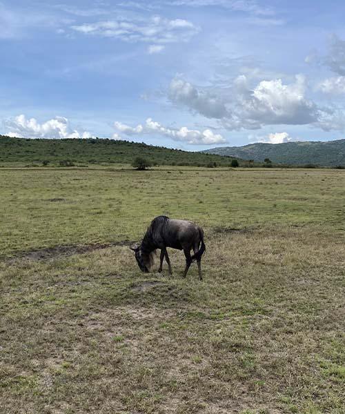 Safari u Masai Mara