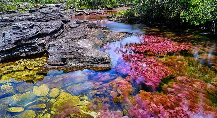 Cano Cristales: je li ovo najljepša rijeka na svijetu?
