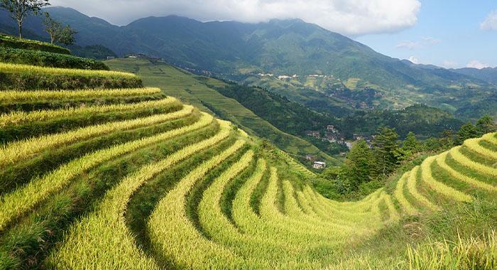 PlaninaLongji, spektakularna rižina polja u Kini!