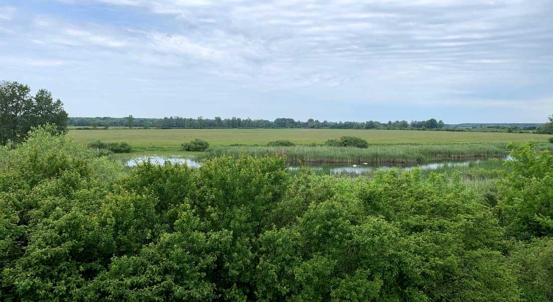 Ornitološki rezervat Krapje Đol u Lonjskom polju