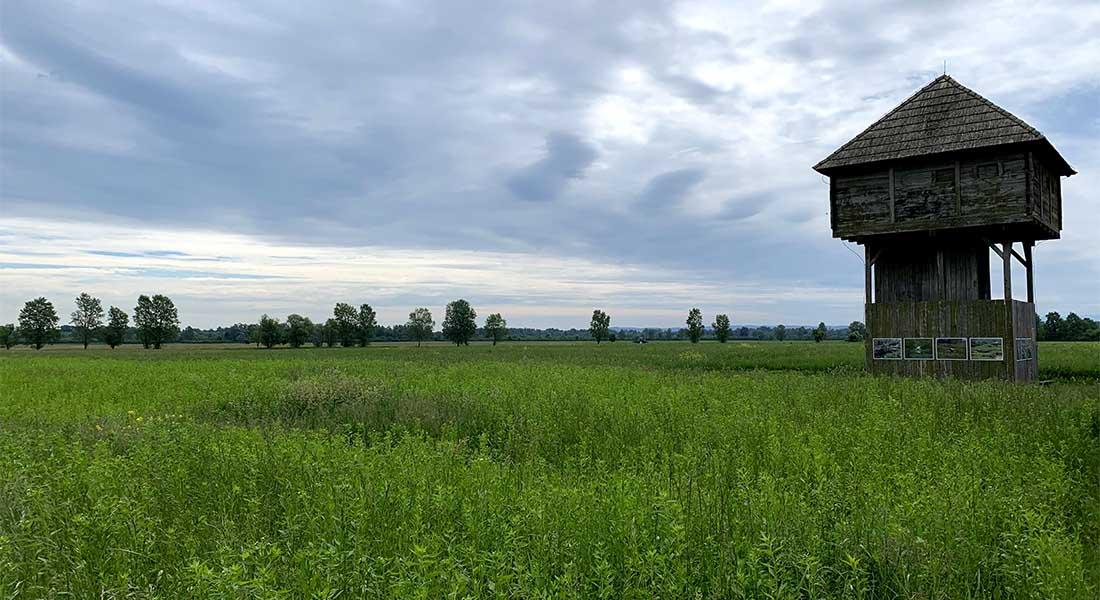 Čardak osmatračnica u Parku prirode Lonjsko polje