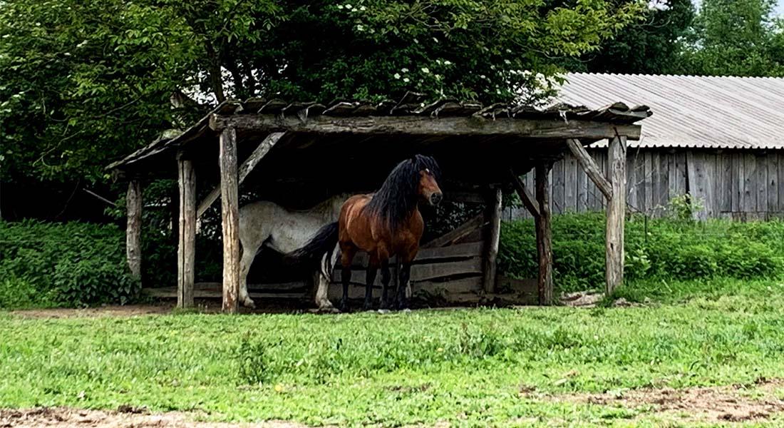 Hrvatski posavski konj u Krapju