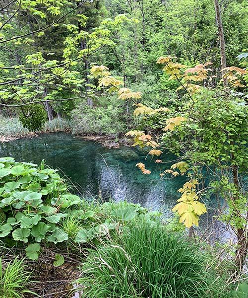 Jezero i priroda