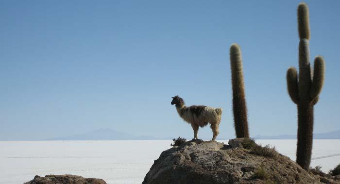 Salar de Uyuni: u hotelu od soli zabranjeno je lizati zidove!