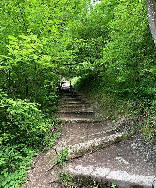 Staza kroz šumu u Samoboru